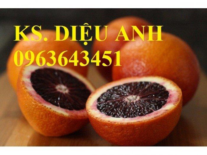 Chuyên cung cấp cây giống chanh nhập khẩu: chanh ngón tay, chanh máu, chanh ruột đỏ, cam máu.8