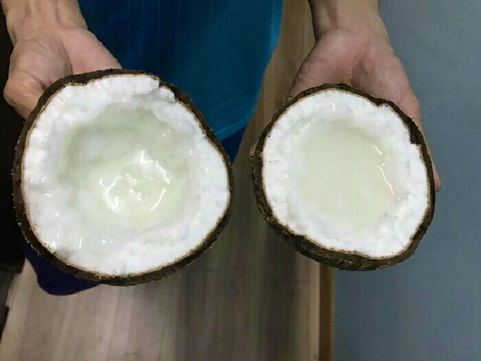 Dừa sáp chất lượng cao3