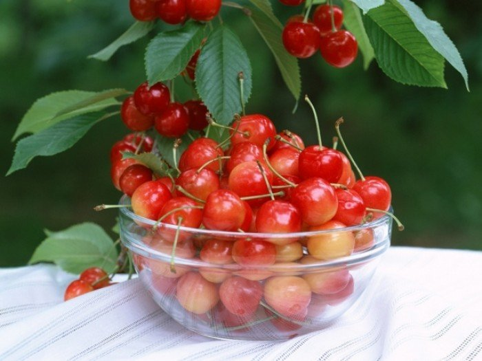 Chuyên cung cấp cây giống cherry anh đào, giống cherry nhập khẩu, giống cherry4