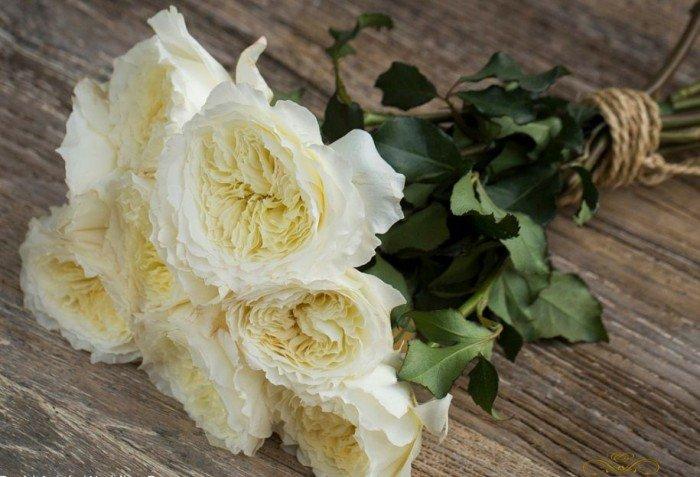 Chuyên cung cấp giống hồng ngoại giâm cành,hồng ngoại,hoa hồng,hồng ngoại4