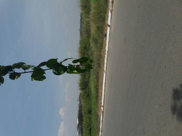Đất trồng cây lâu năm SHR 2000m giá 7 tỷ