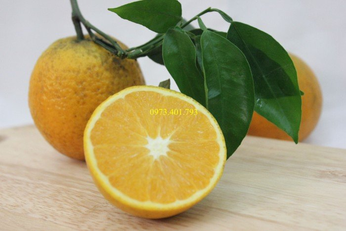Giống cây cam Vinh, cam Vinh, cây cam Vinh, cây cam, kĩ thuật trồng cây cam4