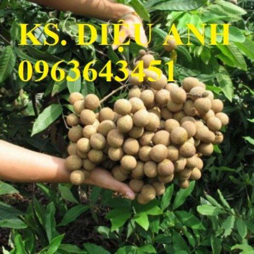 Chuyên cung cấp cây giống nhãn miền thiết, nhãn hương chi, nhãn T60