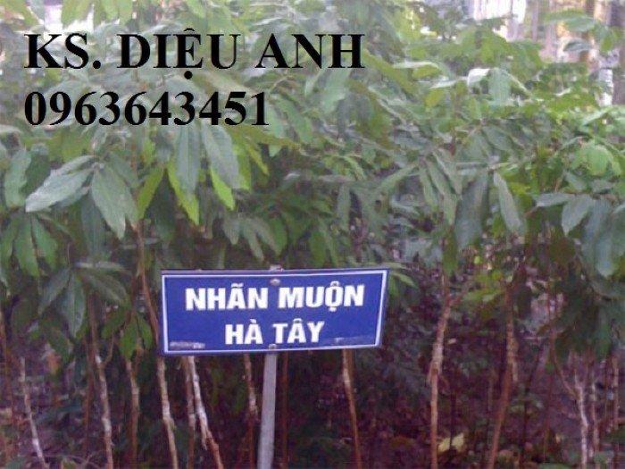 Chuyên cung cấp cây giống nhãn miền thiết, nhãn hương chi, nhãn T66