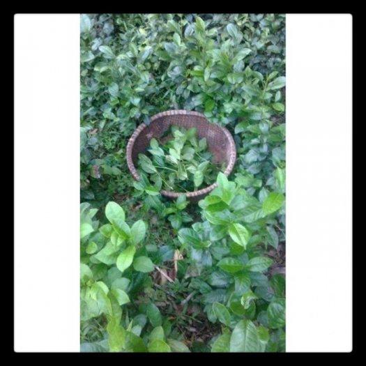 Thanh lý bột trà xanh Thái Nguyên1
