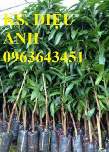 Chuyên cung cấp cây giống xoài tím úc, xoài tím ngọc vân chất lượng cao, bảo hành cây giống, giao cây toàn quốc3
