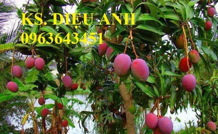 Chuyên cung cấp cây giống xoài tím úc, xoài tím ngọc vân chất lượng cao, bảo hành cây giống, giao cây toàn quốc5