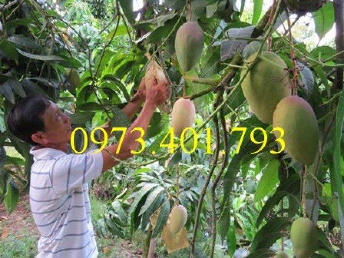 Chuyên cung cấp cây giống cây xoài đài loan miền Nam giá rẻ0
