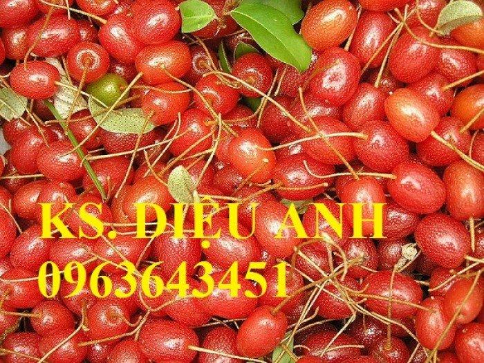 Chuyên cung cấp cây giống nhót ngọt chuẩn F1, uy tín, chất lượng cao, giao cây toàn quốc.2