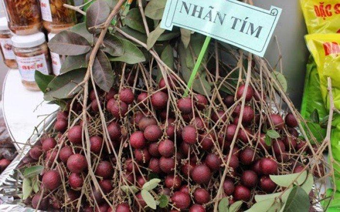 Bán cây giống nhãn tím, nhãn không hạt, chuẩn giống, giao cây toàn quốc.3