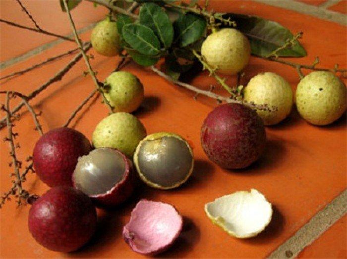 Bán cây giống nhãn tím, nhãn không hạt, chuẩn giống, giao cây toàn quốc.4