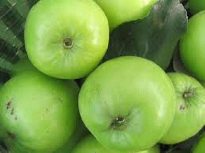 Bán giống táo D28, chuẩn giống, số lượng lớn, giao cây toàn quốc2