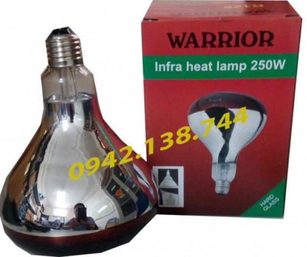 cung cấp bóng đèn hồng ngoại warror- bóng đèn úm cho gia cầm gia súc7