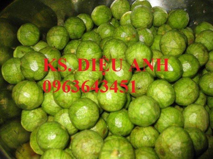 Chuyên cung cấp cây giống sấu ghép, sấu hạt, sake, sa kê, măcca, mắc ca, macca chuẩn giống6