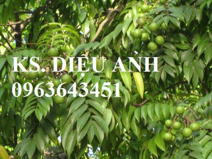 Chuyên cung cấp cây giống sấu ghép, sấu hạt, sake, sa kê, măcca, mắc ca, macca chuẩn giống7