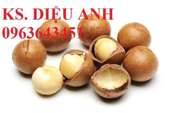 Chuyên cung cấp cây giống sấu ghép, sấu hạt, sake, sa kê, măcca, mắc ca, macca chuẩn giống14