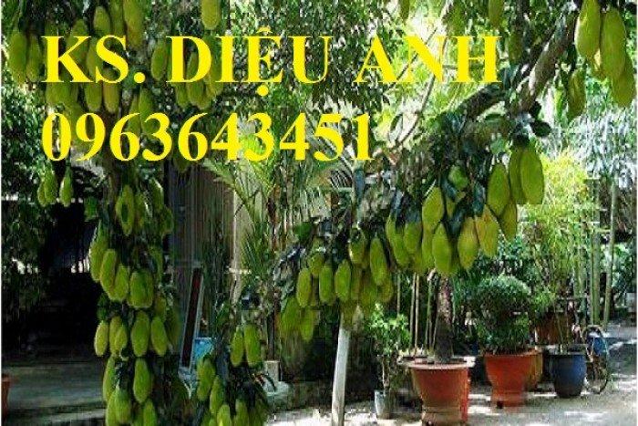 Chuyên cây giống mít tố nữ, mãng cầu xiêm, mãng cầu xiêm thái, mãng cầu 4 mùa, roi thái đỏ quả to chuẩn giống13