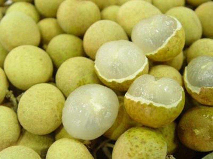 Chuyên cung cấp giống cây nhãn không hạt,nhãn không hột,nhãn không hạt,nhãn2