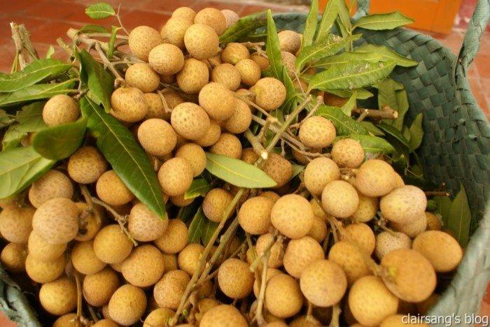 Chuyên cung cấp giống cây nhãn không hạt,nhãn không hột,nhãn không hạt,nhãn4