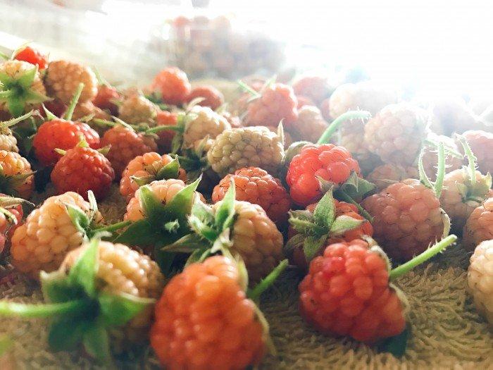 Cách bảo quản đông lạnh Phúc Bồn Tử/Mâm Xôi để sử dụng trái tưới được lâu hơn3