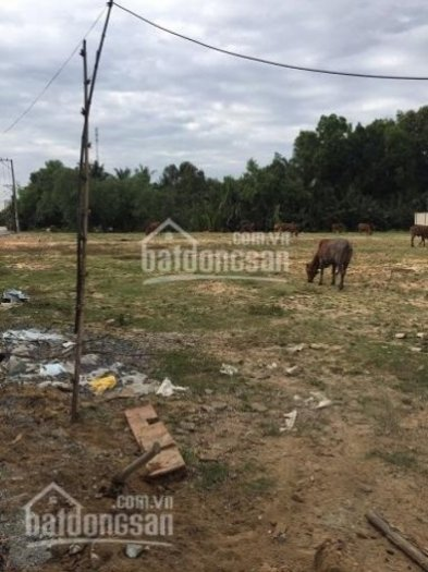 Bán đất vườn đường số 7, p. Long Phước, Quận 9, dt: 784 m2, 6,1 tỷ