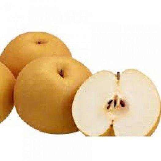 Cây giống lê vàng, chuẩn giống, số lượng lớn, giao cây toàn quốc3