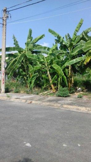 Bán Đất Biệt Thự Mini 7x17,5m Đường 8 KDC Phú Nhuận - P.HBC