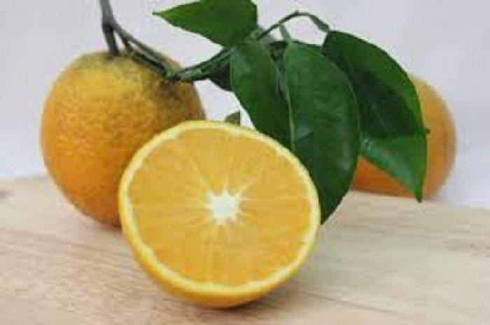 Cây giống cam vinh, số lượng lớn.6