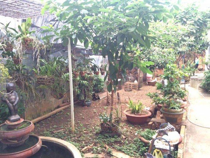 Bán nhà vườn ami đoan, thổ cư, hướng nam