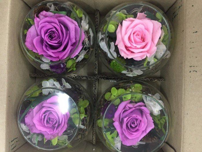 hoa hồng bất tử lọ thủy tinh 1 bông1