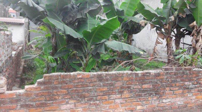 Bán đất 43 m2 đất ở tại Sơn Du