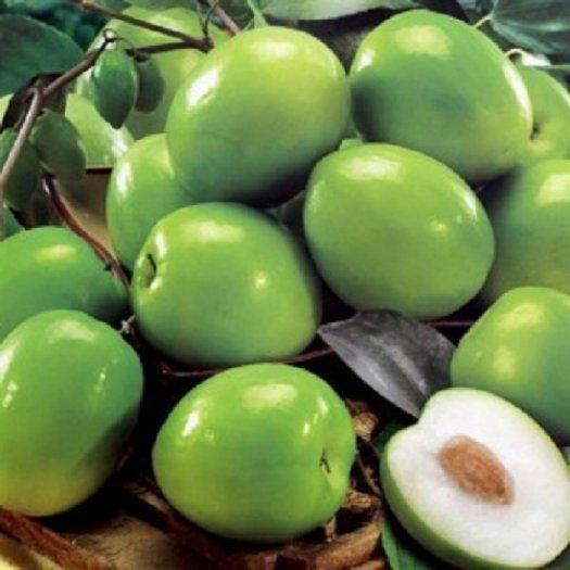 Cây giống táo Thái Lan, số lượng lớn, giao cây toàn quốc.3