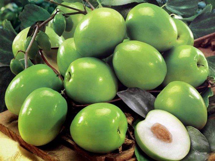 Cây giống táo đại, số lượng lớn, giao cây toàn quốc.1