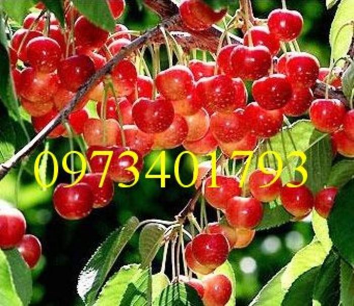 Giống cây Chery Anh Đào2
