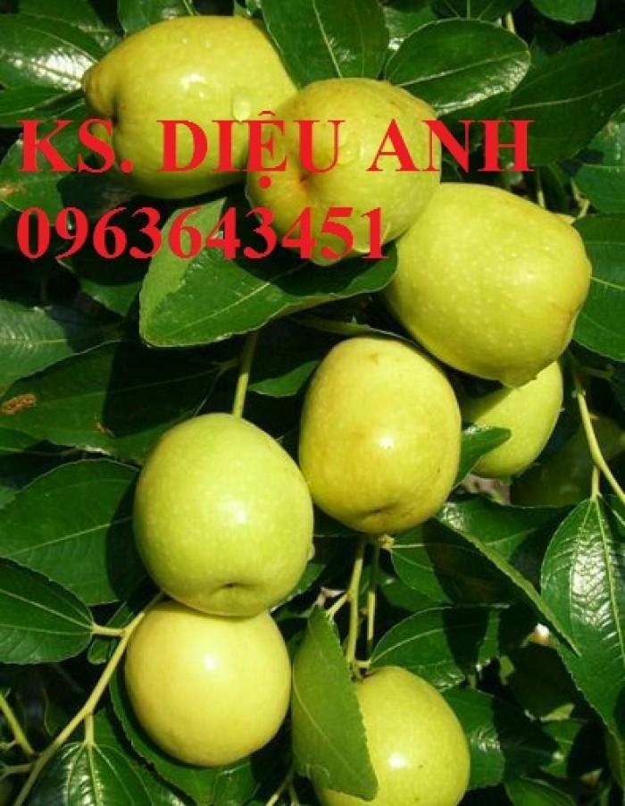 Cây giống táo đại, táo đào vàng, táo Đài Loan, táo Thái Lan, táo T5, táo D28, hỗ trợ kĩ thuật và đầu ra6