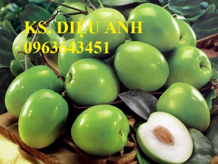 Cây giống táo đại, táo đào vàng, táo Đài Loan, táo Thái Lan, táo T5, táo D28, hỗ trợ kĩ thuật và đầu ra12