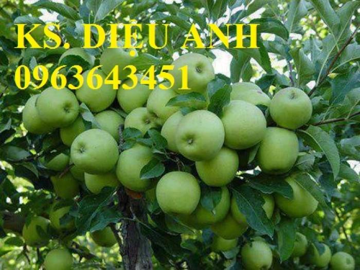 Cây giống táo đại, táo đào vàng, táo Đài Loan, táo Thái Lan, táo T5, táo D28, hỗ trợ kĩ thuật và đầu ra16