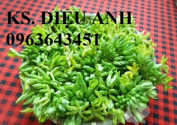 Cây giống thiên lý siêu hoa, mận hậu, mận tam hoa, hạt giống, cây giống măng tây xanh12