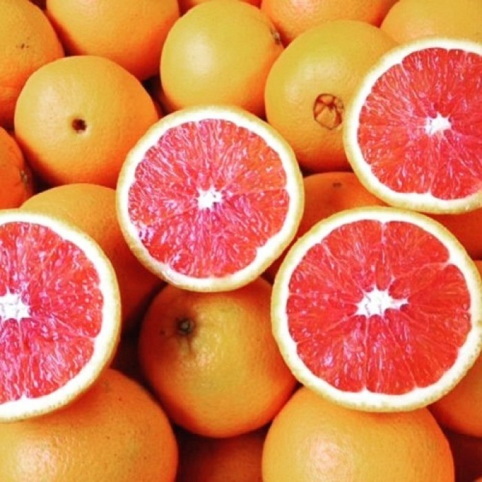 Chuyên cung cấp cây giống cam cara ruột đỏ, cam ruột đỏ không hạt, cam kết chuẩn giống4