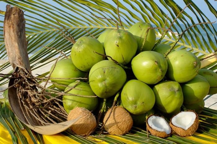 Chuyên Cây giống dừa xiêm lùn, dừa lửa, dừa xiêm dây, dừa xiêm xanh, cam kết chuẩn giống3