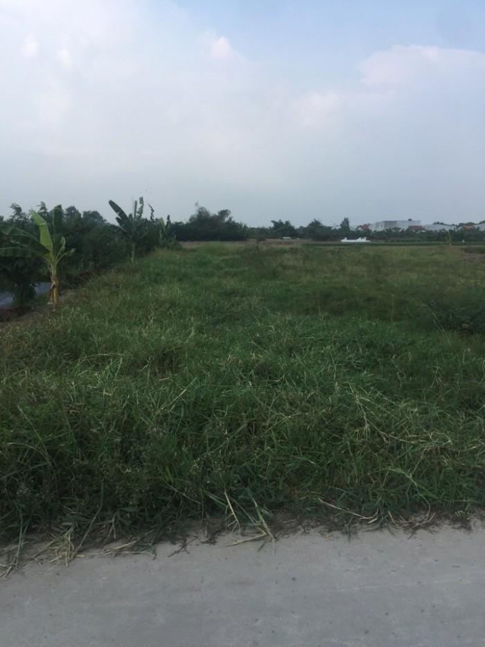 Cần tiền bán gấp 3000 m2 đất mặt tiền đường nhựa 12m, Hưng Long, Bình Chánh