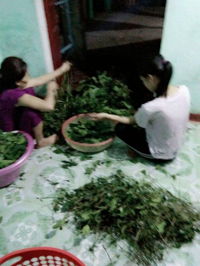 nhà làm 100% lá chè từ quê Quảng Ngãi