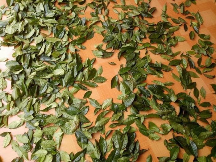 Bột trà xanh nguyên chất 100%