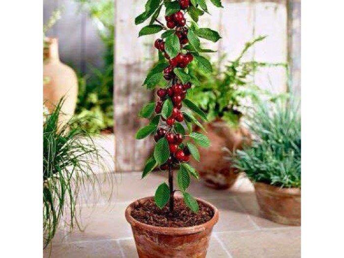 Hạt giống cây ăn quả trồng lâu năm2