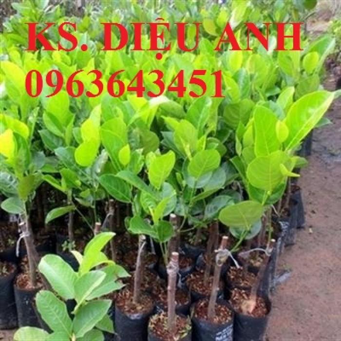 Kỹ thuật trồng và chăm sóc cây mít thái siêu sớm, mít changai da xanh, mít ruột đỏ, mít không hạt3