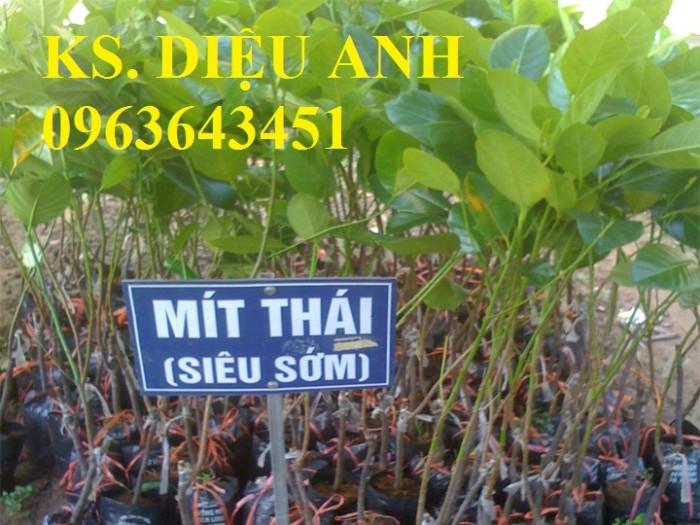 Kỹ thuật trồng và chăm sóc cây mít thái siêu sớm, mít changai da xanh, mít ruột đỏ, mít không hạt10