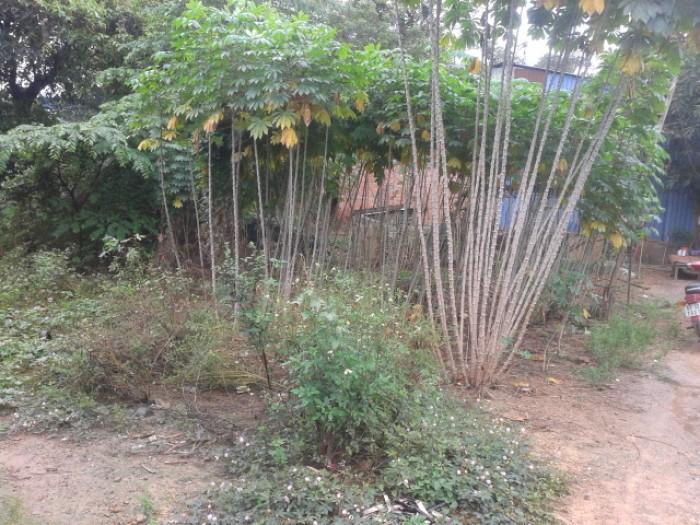 Bán 120m2 đất  Bình Thung gần khu tái định cư làng ĐHQG ,đường nhựa 4m thông