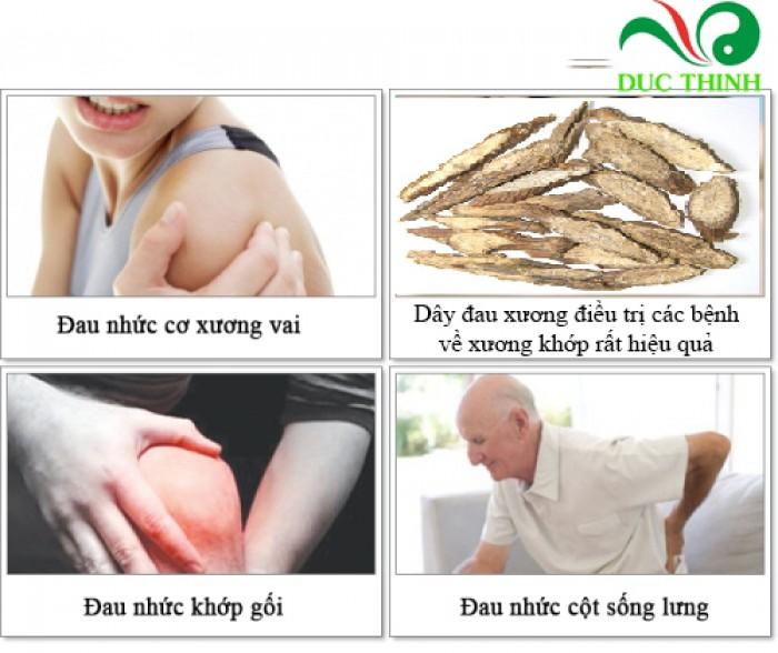 3. Các bài thuốc từ dây đau xương   Bài 1: Hỗ trợ điều trị đau thần kinh tọa như sau:  - Dây đau xương, kết hợp kê huyết đằng, Cành lá kim ngân, Ngũ vị tử, mỗi thứ 15g, sắc uống ngày 1 thang.  Bài 2: Hỗ trợ điều trị thấp khớp, đau nhức xương khớp, đau lưng mỏi gối:  - Dây đau xương, Đơn gối hạc, rễ gấc, bưởi bung, cỏ xước, liều đều bằng 20g-30g, sắc uống ngày 1 thang.  Bài 3: Bị té ngã, bị đau do hoặc vận động nhiều:  - Lấy lá dây đau xương giã nát, cho thêm ít rượu vào rồi vắt lấy nước cốt uống, bã đem chưng cho nóng, bóp và đắp vào vùng sưng đau sẽ giảm nhanh chóng.  Bài 4: Hỗ trợ điều trị rắn cắn:  - Lá dây đau xương 20g, Rau sam 50g, Lá thài lài 30g, Lá tía tô 20g. Tất cả dùng tươi, rửa sạch, giã nhỏ, vắt nước uống, xong  lấy bã đắp vào vết cắn.