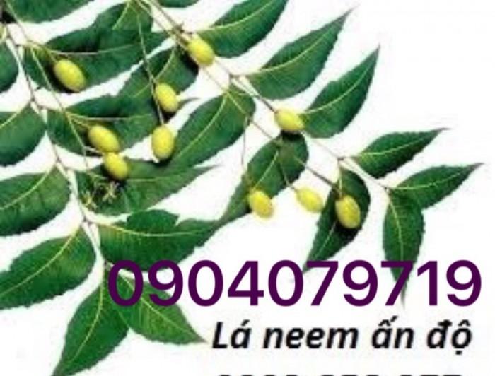 """Cây neem đối với Việt Nam chắc không còn xa lạ nhưng số người biết đến tác dụng của nó có lẽ vẫn đang còn mới mẻ. Đối với các nước phương Đông, nó được ví như một thần dược chữa được hơn 40 loại bệnh khác nhau. Cây neem thích hợp sống ở những miền nhiệt đới, chịu khí hậu khô nóng nên cây được người dân Việt Nam gọi với cái tên là """"cây soan chịu hạn"""" hay """"cây sầu đâu"""" và được trồng nhiều nhất ở Ấn Độ nên dược gọi là Cây neem Ấn Độ, có vị đắng, tính xất khuẩn cao và có khả năng tấy chừ chất độc hiệu quả.  Hiện nay ở nước ta, cây neem được trồng nhiều ở các tỉnh ven biển miền trung, trong y học cổ truyền từ lâu nó đã xuất hiện nhiều trong các bài thuốc dân gian với các công dụng trị liệu hết sức thiết thực và đa dạng như sốt rét, ho, mất ngủ, rối loạn tiêu hóa, viêm lét và đặc biệt là hỗ trợ điều trị bệnh tiểu đường, viêm gan, viêm dạ dày, tim mạch và huyết áp. Trong ngành y tế, các bộ phận của cây như lá, quả, thân, vỏ cây điều được tận dụng làm nhiều loại chế phẩm khác nhau, đối với các nước châu Âu, sản phẩm được làm ra từ neem được cấp phép bán và sử dụng để phục vụ nhu cầu sức khỏe của người dân. Thật hiếm khi có loại thảo dược nào mà lại có công dụng đa năng như vậy. Công dụng của cây lá neem được áp dụng trong các bài thuốc sau: Trong các đề tài nghiên cứu, lá neem đã được chứng minh là giúp làm giảm lượng đường trong máu đối với bệnh nhân bị bệnh tiều đường và được so sánh với các loại thảo dược khác nó vượt trội hơn hẳn. Người bệnh mỗi ngày uống từ 2, 3 ly trà lá neem có thể giúp giảm đáng kể nhu cầu cần insulin cho cơ thể. Cách dùng: lấy từ 5 đến 15 lá neem nấu trong nước sôi chứa 750ml nước, ngày uống 3 lần trước bữa ăn 15 phút. Nhầm tránh tình trạng kích ứng đột ngột của bệnh, đầu tiên bệnh nhân nên uống từ 5 lá, tiếp đến 7,10 lá và tiếp các ngày kế tiếp là 15 lá, nên duy trì uống liên tục trong vòng 1 tháng để có kết quả tốt nhất."""