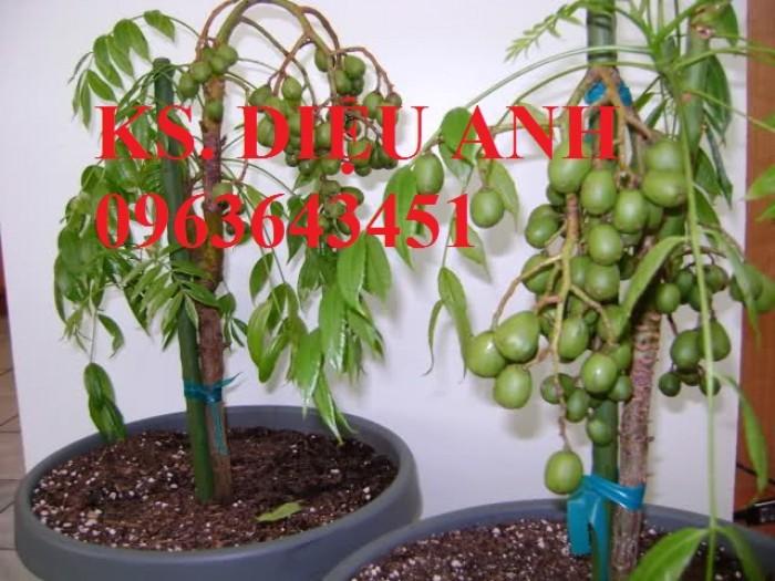 Cây giống, cây to cóc bao tử, cóc thái bạn có muốn trồng không?7